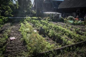 la maggior parte delle case lungo l'onion route possiede un proprio orto e una coltivazione di cipolle